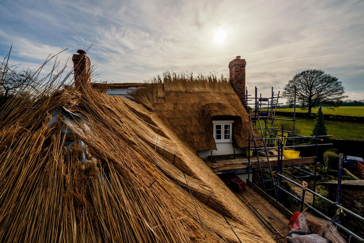 A thatched roof will last about 40 years