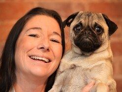 Alastor the pug: Family relive 'heartbreaking' ordeal after beloved dog snatched by thief