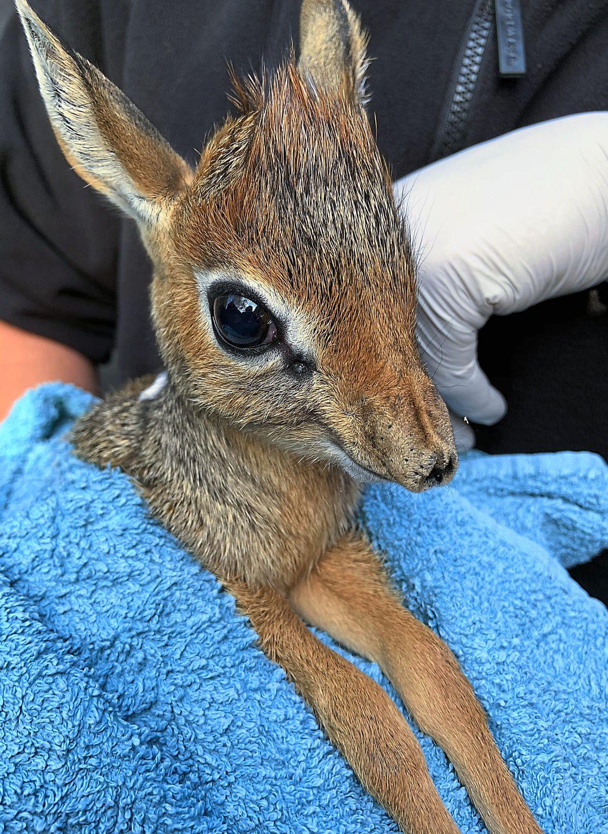 Twycross Zoo's newest arrival