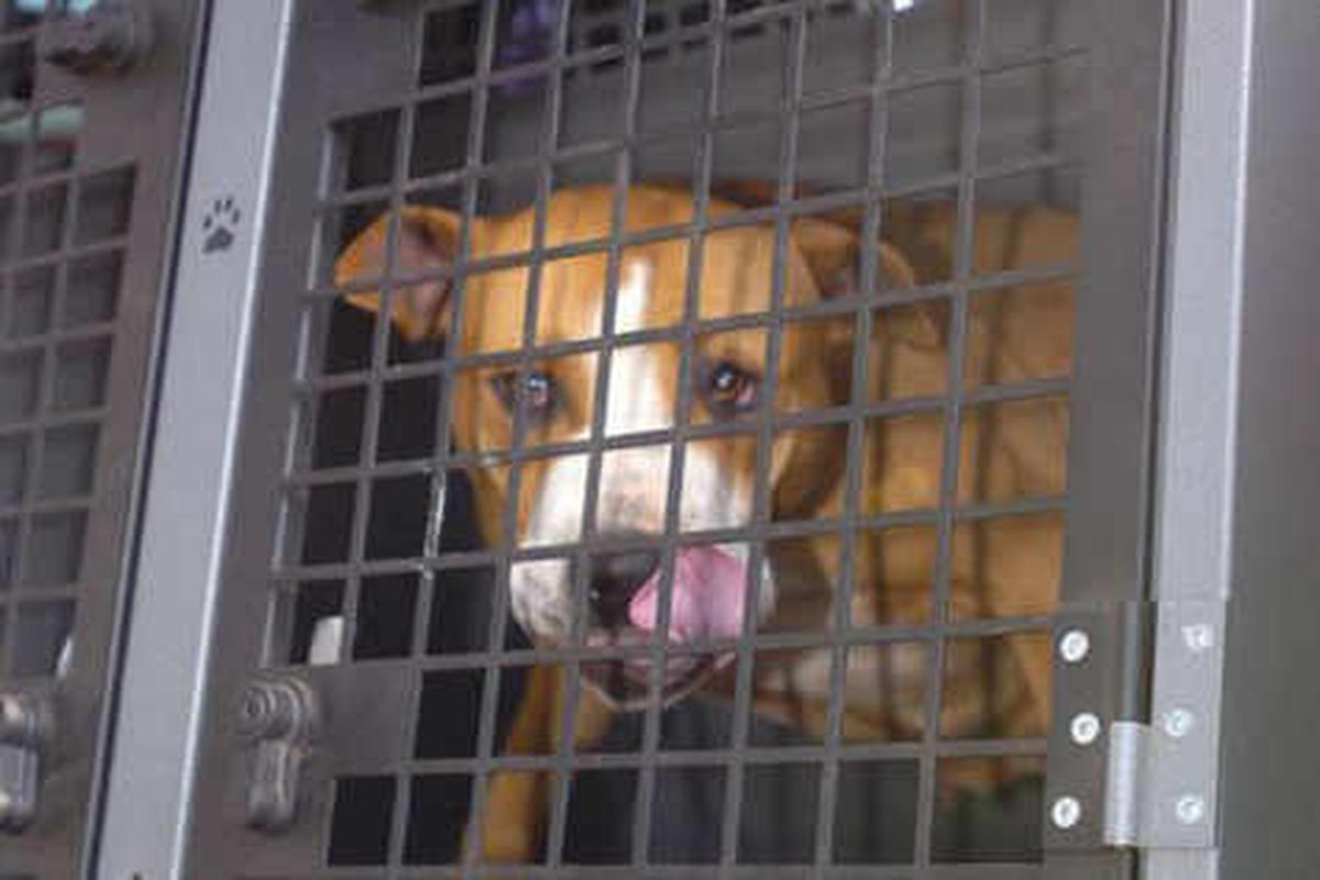 Number of dangerous dogs seized has doubled