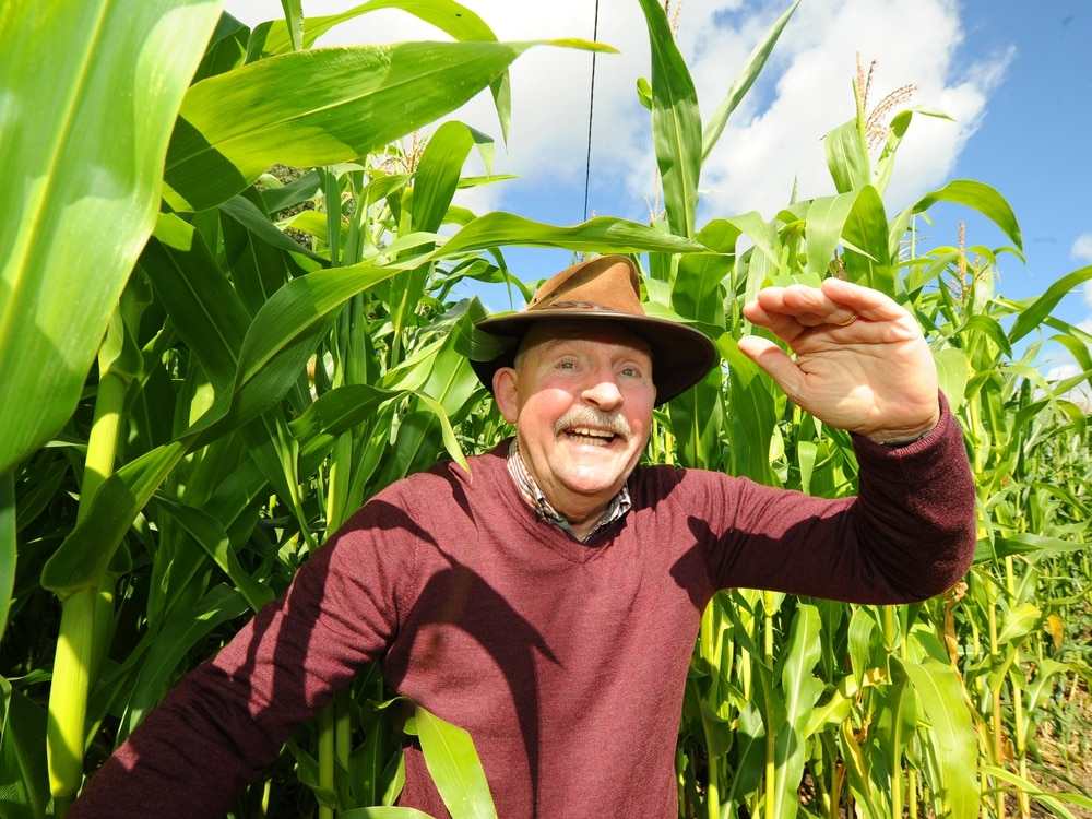 Maize maze opens at Forge Mill Farm