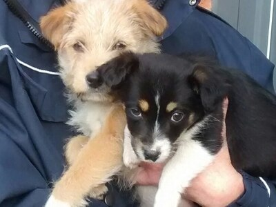 Appeal after callous pair dump puppies in bush in Kingswinford