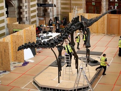 Dippy the dinosaur going on show in Scotland