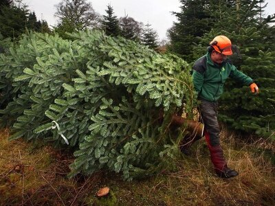 MSPs pass 'landmark' Scottish forestry Bill