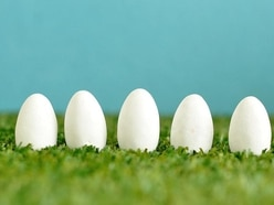 A football match was halted because of eggs and the resulting puns were, well, eggcellent