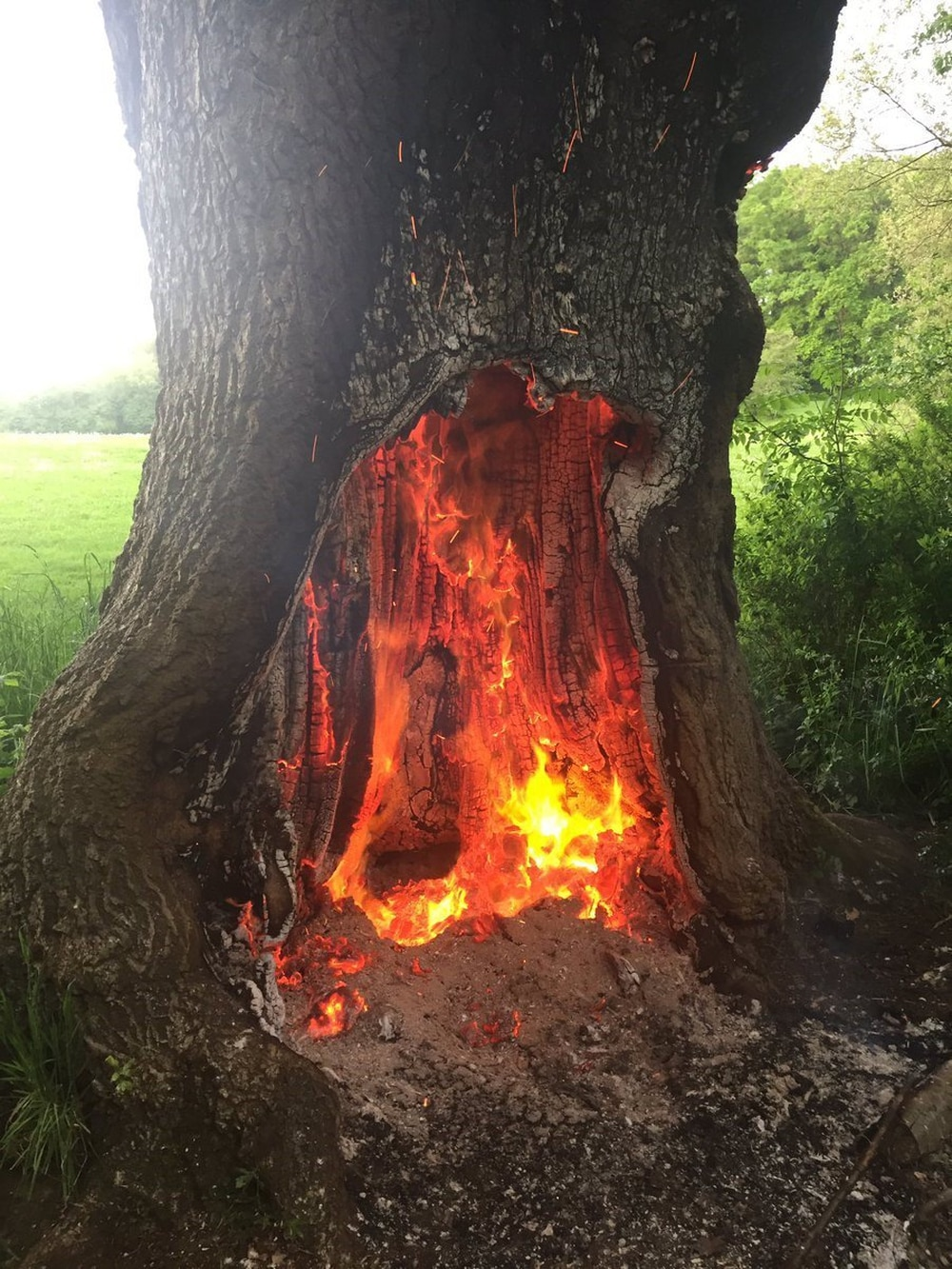 250-year-old ancient oak tree catches fire in Cannon Hill Park