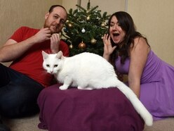 'Devil cat' finds a happy home just in time for Christmas