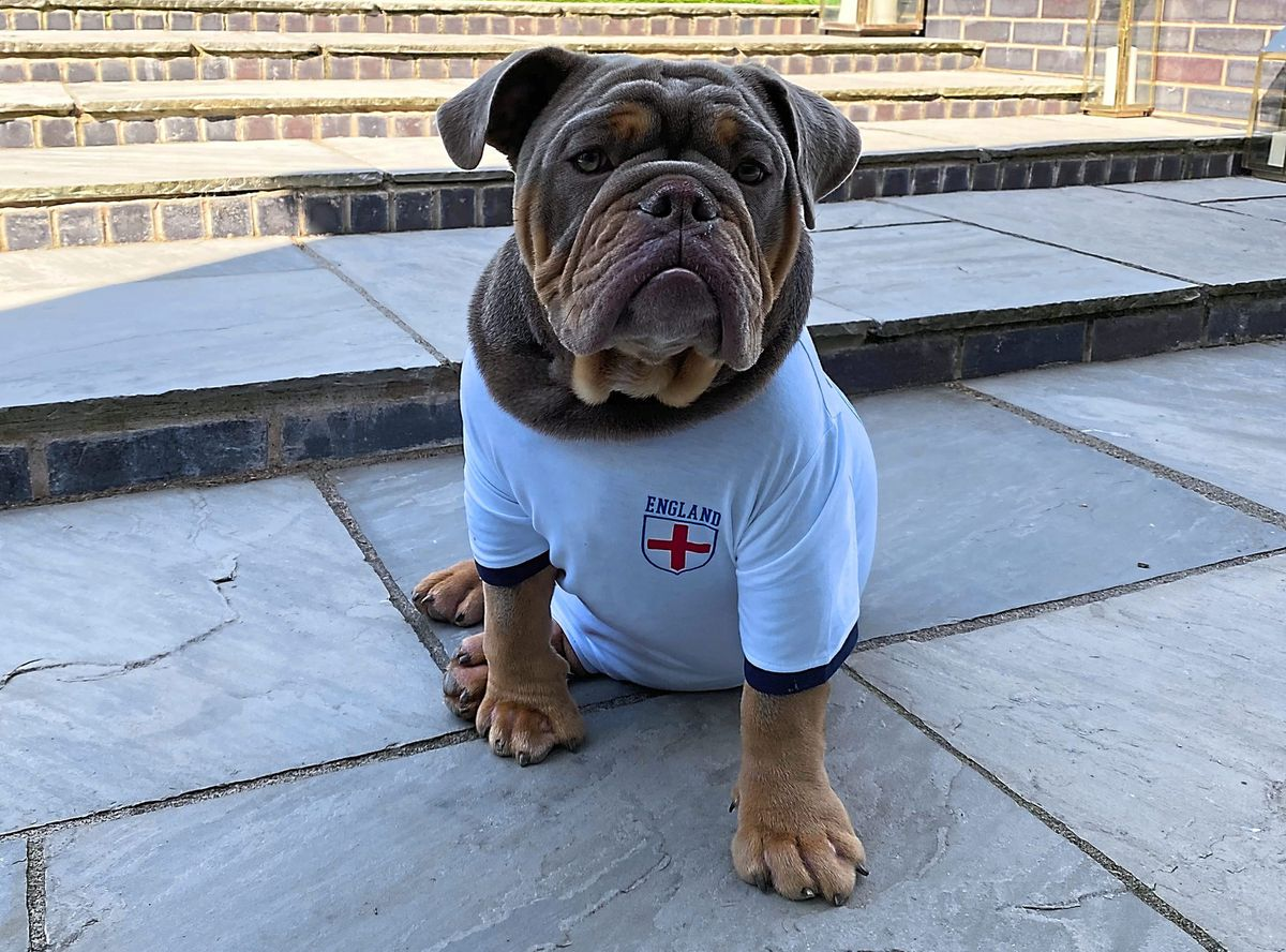 Rocket the Bulldog will be supporting England on Sunday for the big final