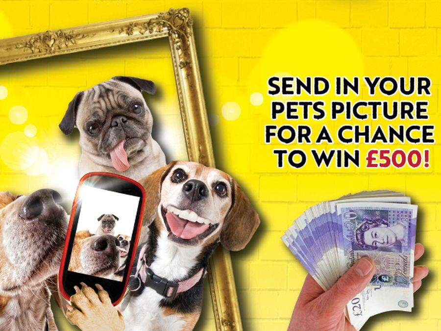 Scroll down to enter our Pawtrait Pets competition