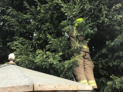 Firefighters rescue Benji the cat from a tree in Brierley Hill