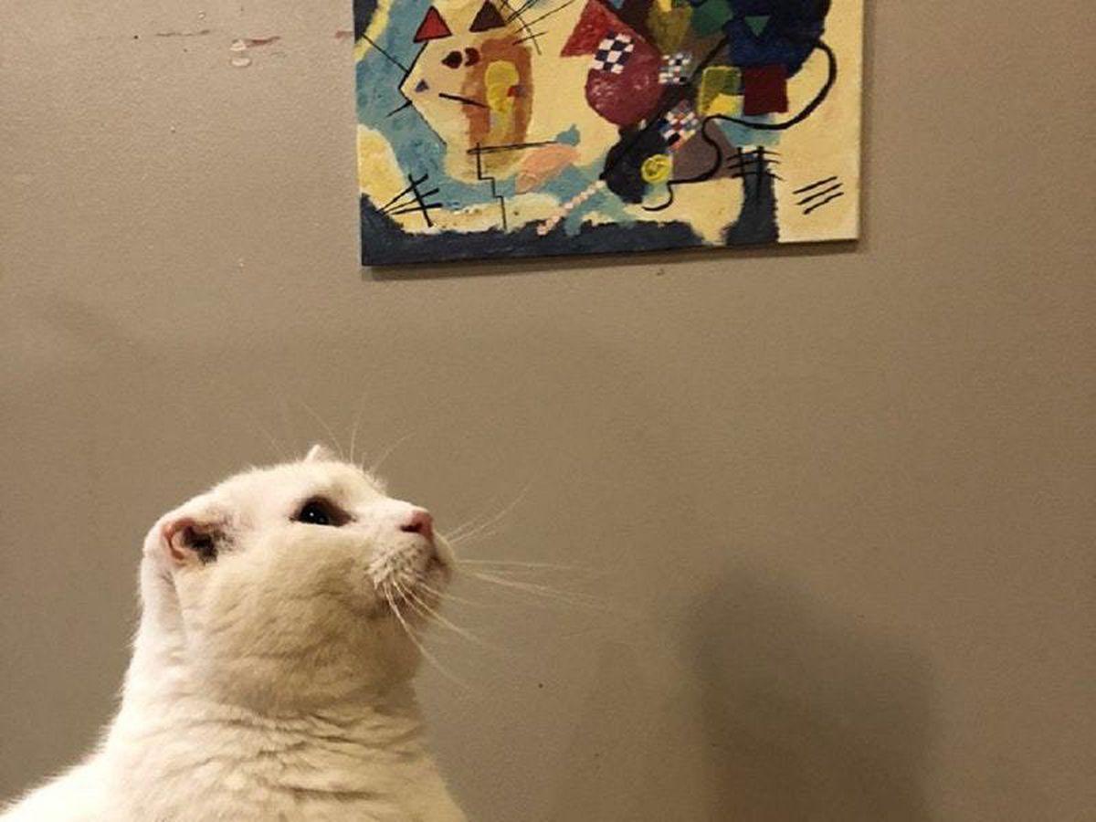 Snowball looks at his print