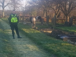 Horses found in Walsall cemetery