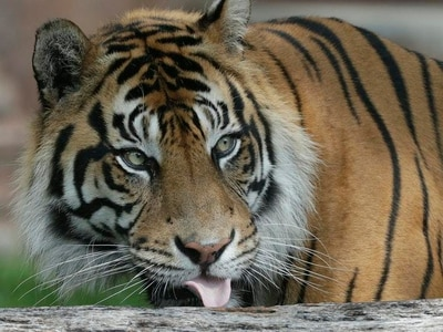 Judge orders Tiger King's jailed Joe Exotic to hand zoo to arch-rival