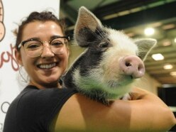 Animal lovers descend on Stafford pet show - with pictures and video