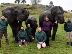 Jobs up for grabs at West Midland Safari Park