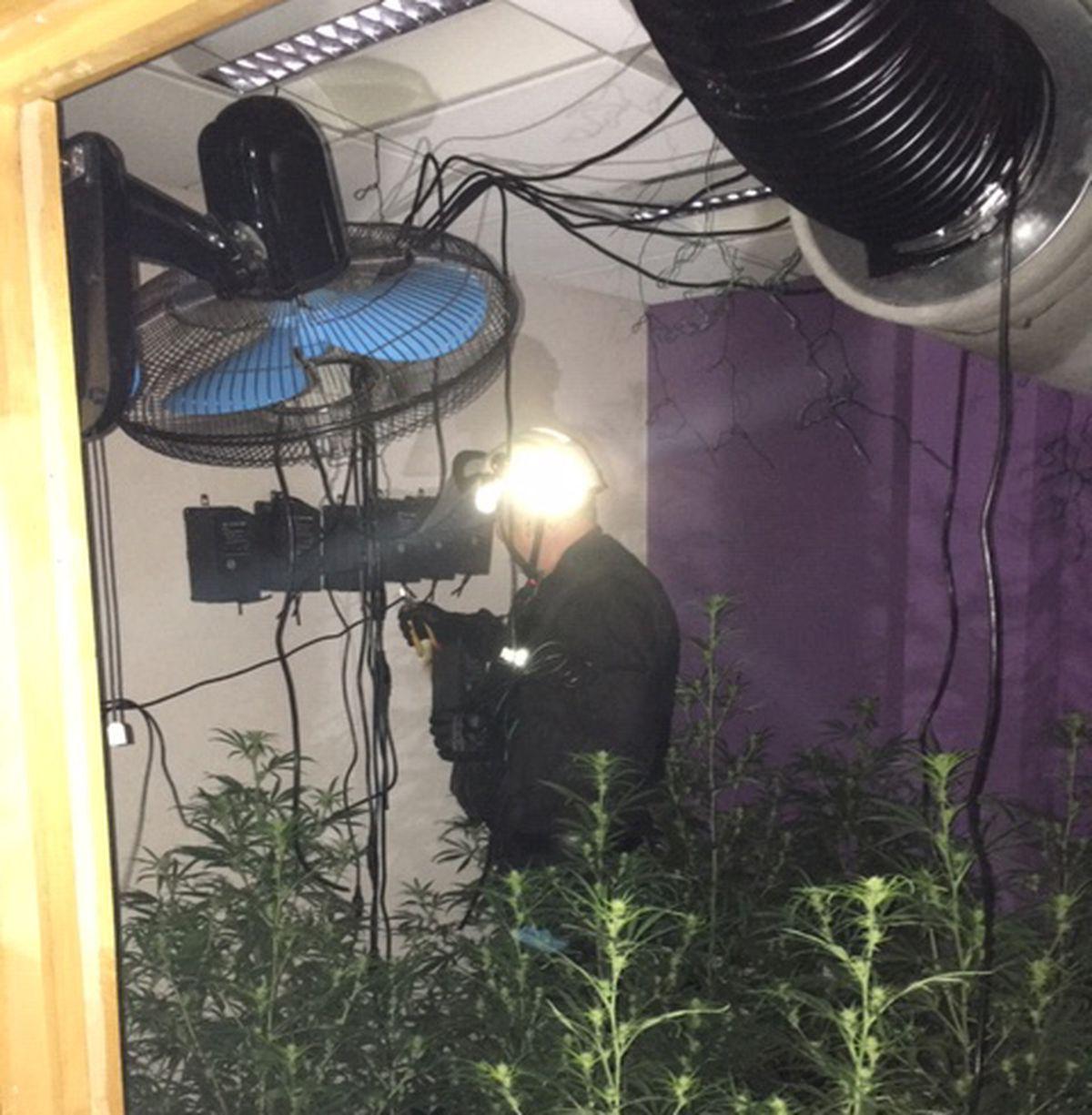 Inside the cannabis farm