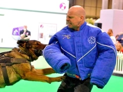 Crufts 2019: Work dogs on show at Birmingham NEC