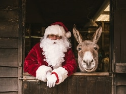 WIN: An adoption pack from The Donkey Sanctuary Birmingham