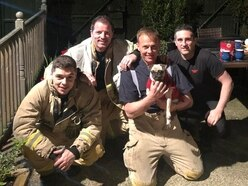 Firefighters haul pug out of 40m well using bag of treats