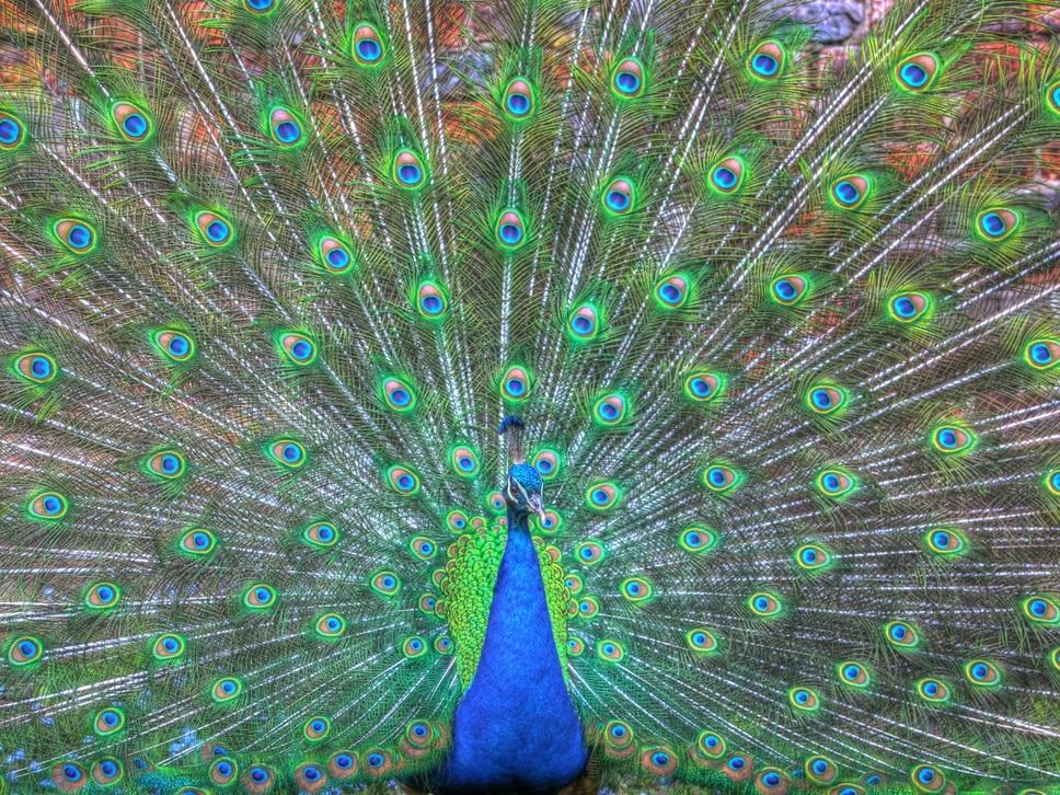 Wonderful world of wildlife captured on camera