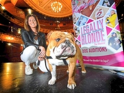 Dog chosen for Legally Blonde in Wolverhampton