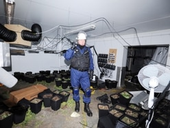 'We will tackle the drug gangs': Police vow as three cannabis farms found a day