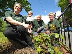 Wednesfield in Bloom reveals newly-planted rosebushes dedicated to lost loved ones