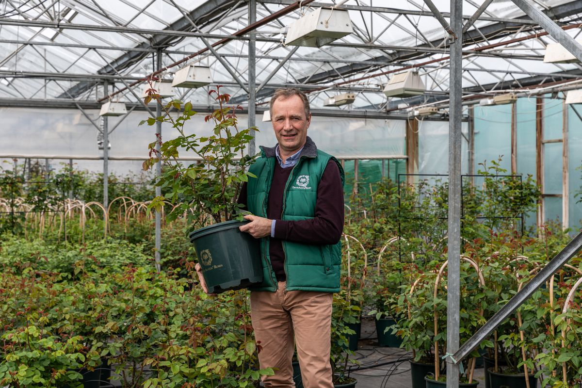 David Austin Jr with new varieties in a green house