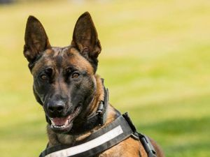 PD Pancho chased and pinned down the man before he was arrested (Image by West Midlands Police)