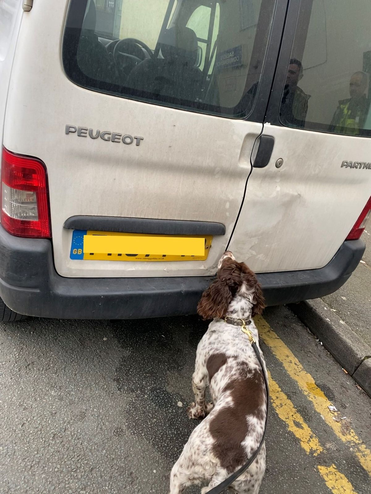 Tobacco detection dog Scamp at the van