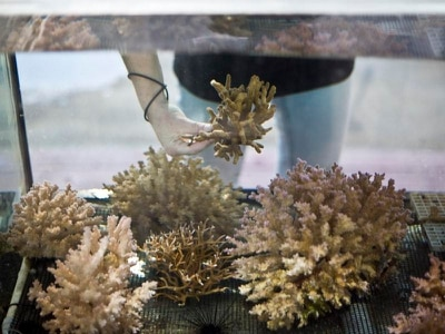 Red Sea discovery offers hope for world's coral reefs