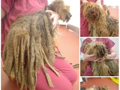Dog left covered in dreadlocks after 'long-term neglect'