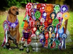 Dog holds UK record and boasts around 1,000 awards