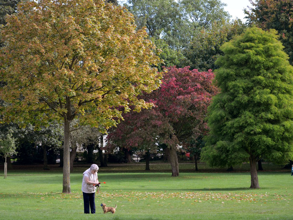 Several trees could be chopped down at Bantock Park in Wolverhampton
