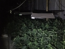 Attempted ram-raid leads police to cannabis farm at Black Country industrial estate