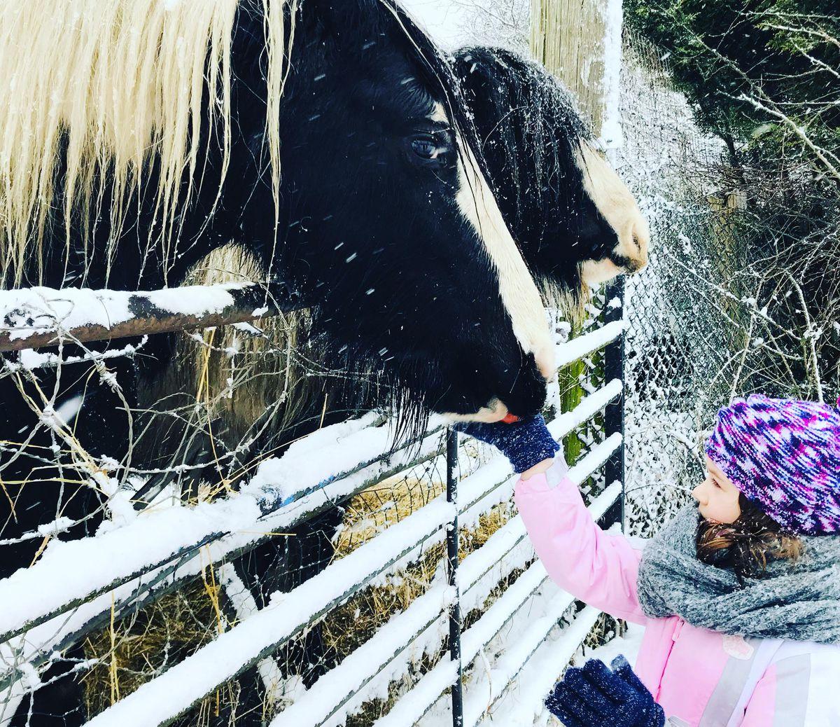 Feeding horses Pic: Elena Suciu