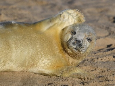 In Pictures: Pupping season gets seal of approval in Norfolk