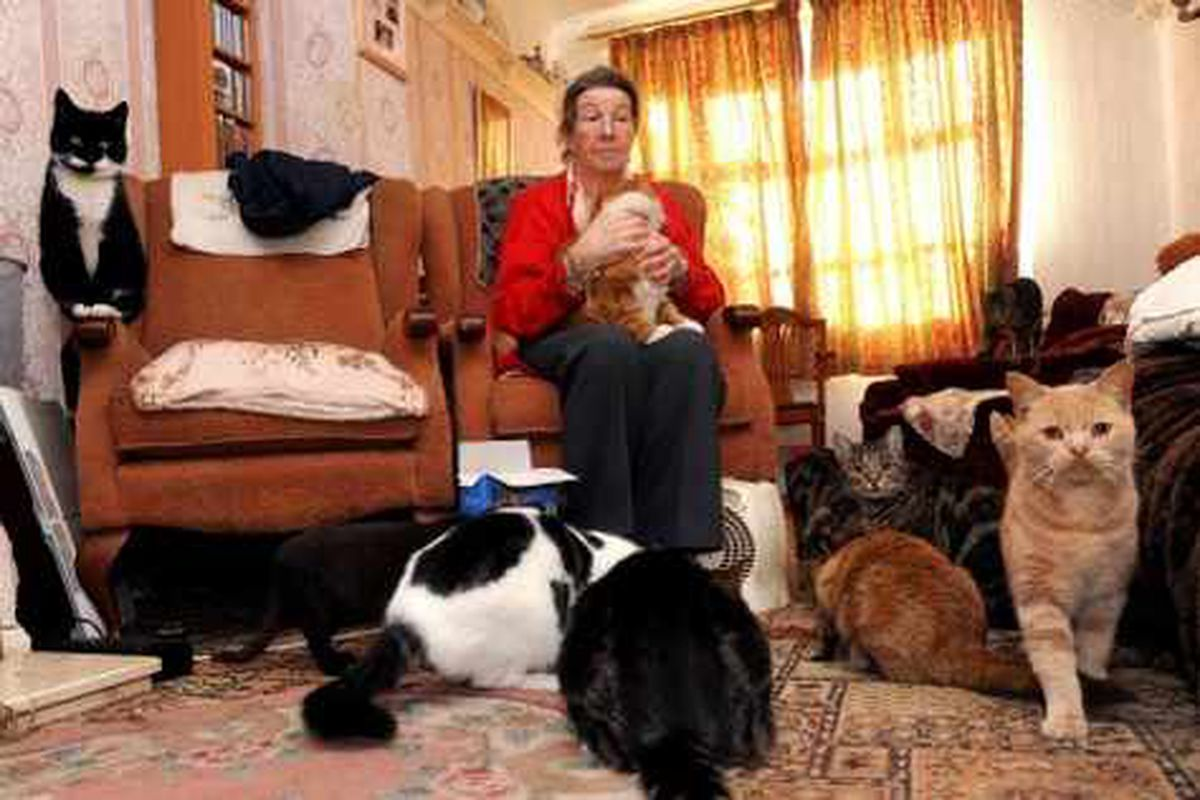 Wednesfield widow must rehome 13 cats or face £20,000 fine