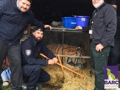'Concerned citizen' who went to abandoned home to smoke weed finds caged tiger