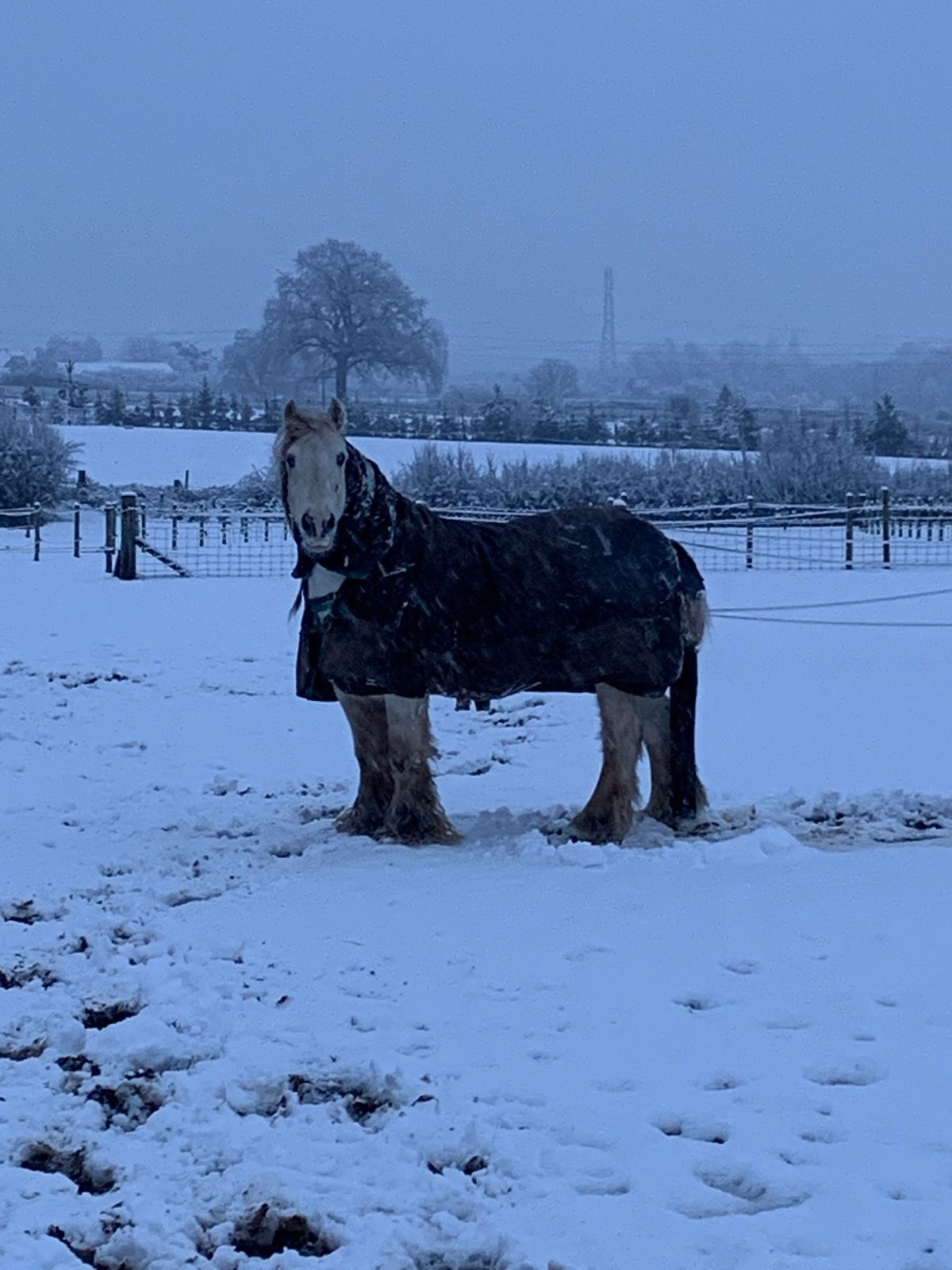 Louise Brown visited her ponies in the snow in Codsall