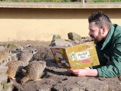 Once upon a time…Dudley Zoo keeper Jay tells meerkats a story for World Book Day