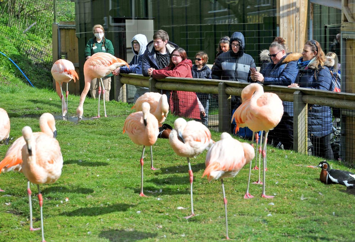 Dudley Zoo is hoping for 2,000 visitors each day in August