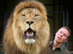 Lion tamer banned from using big cats - including three kept near Cannock