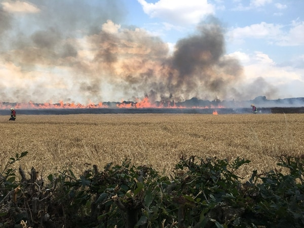 Arson attack sparks crops fire across land the size of 30 football pitches