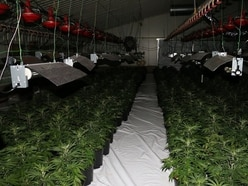 Revealed: 400 drugs factories raided in cannabis crackdown