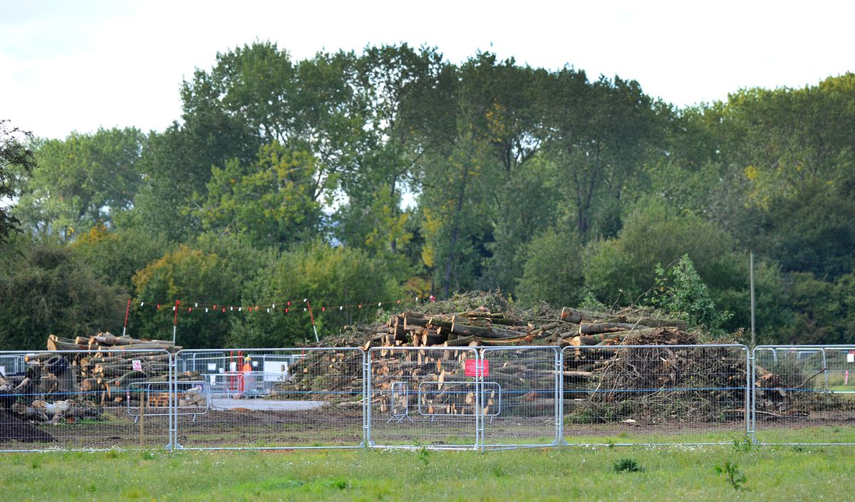 Controversy – Some of the felled trees are piled up at the site