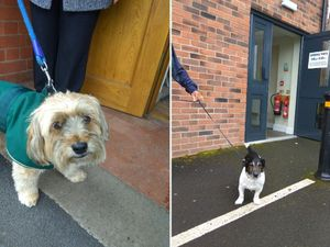 Dogs at polling stations: Pooches star in paw-fect election Twitter trend
