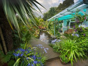 The garden on Oakhampton Road will open up to visitors. Photo: National Garden Scheme
