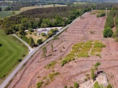 WATCH: Drone footage capture mass tree felling at beauty spot