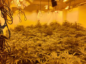 The cannabis was found at Coton Avenue in Kingston Hill, Stafford
